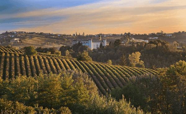 Vingårdssemester i Italien